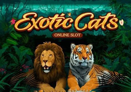 Exotic Cats – paka pori na msitu vitakuburudisha!