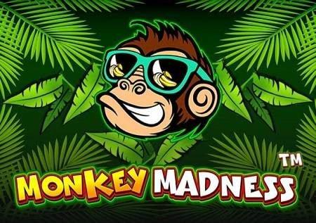Monkey Madness – sloti rahisi na yenye faida sana!