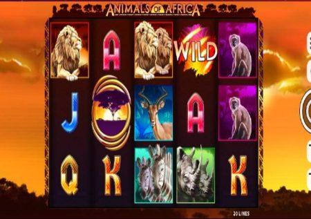 Animals of Africa – sloti yenye alama mbili!